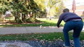 If People Behaved Like Squirrels - Gus Johnson Comedy Short