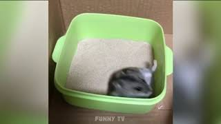 Funny Cute Animals Hamsters 4