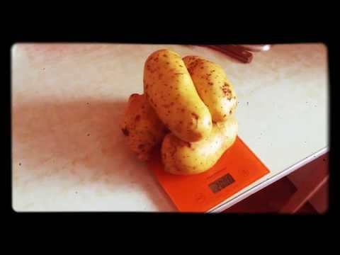 ЛУЧШИЙ СОРТ КАРТОФЕЛЯ - КОРОЛЕВА АННА! | семеноводство | президент | картофель | селекция | королева | картошка | урожай | огород | лучший | клубни