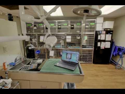 Veterinarian Memphis TN | Emergency Vet Clinic