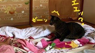 赤ちゃんと二人きりで猫さん大慌て! 【今は仲良し🌸】 thumbnail