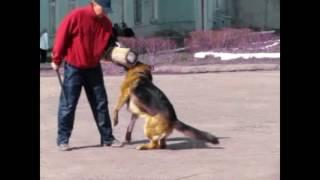 Как служебная собака может играть в футбол.