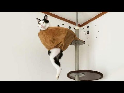 Funniest Cats ? - Don't try to hold back Laughter ? - Funny Cats Life