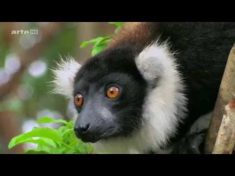 (1.5) Voyages au bout du Monde - En Afrique, Madagascar
