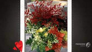 Coprosma - garden plants