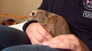 Rabbit Loves To Be Cuddled thumbnail