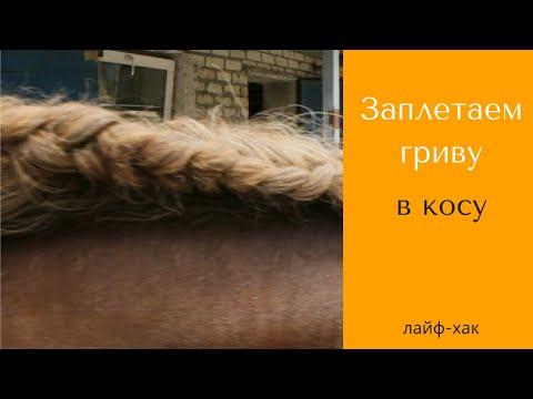 Как заплести лошадь