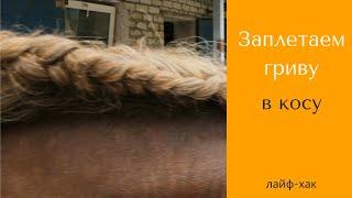 Заплетание гривы в косу | Уход за гривой лошади | Дивные кони