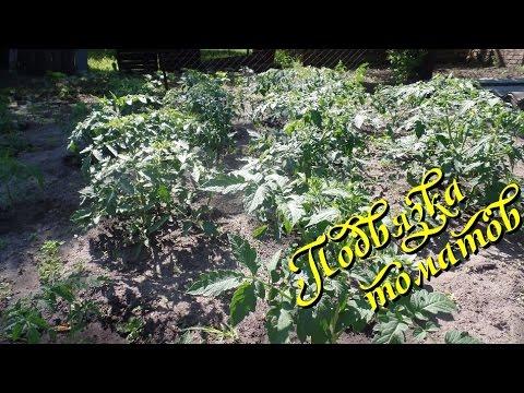 Подвязка томатов в открытом грунте