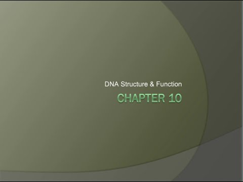 20 DNA Structure and Function