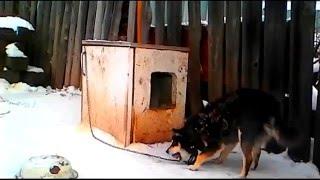 Нано-будка для собаки из старого холодильника.Рекс.2015г.