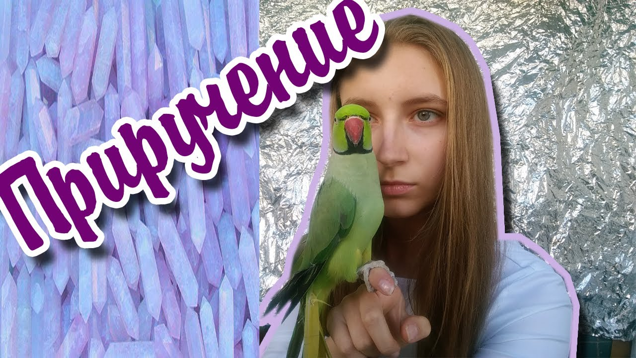 Попугай жако красиво поет и говорит! Посмотрите - YouTube