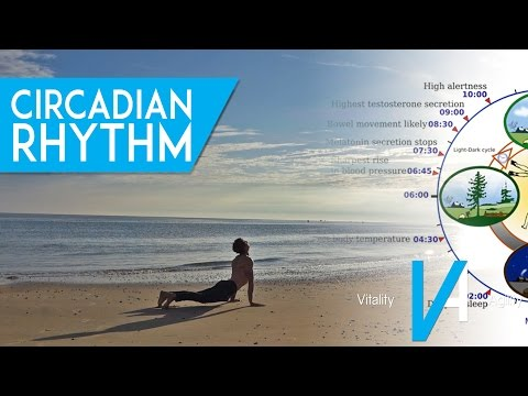 How Circadian Rhythm Affects Your Performance And Recovery