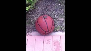 Weird lizards having sex on basketball