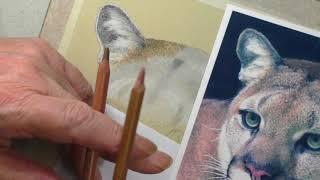 How To Draw Mountain Lion Fur | Pastel Pencil Tutorial