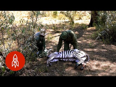 Pictures of wild animals in kenya