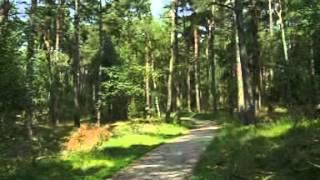 Fietspaden Flevoland en Veluwe