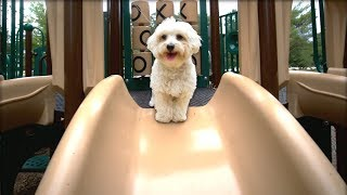 PUPPY'S FIRST TIME GOING DOWN A SLIDE!!!