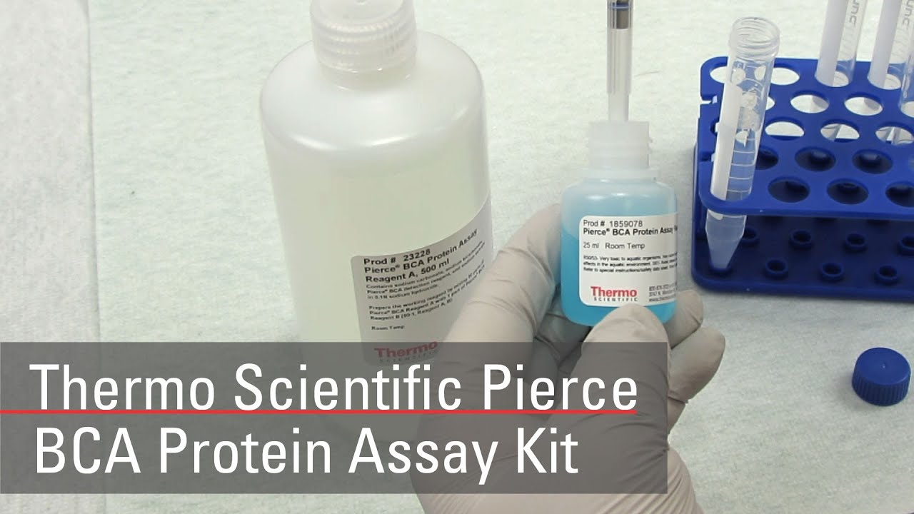 Thermo scientific pierce micro bca protein assay kit; 500ml kit.