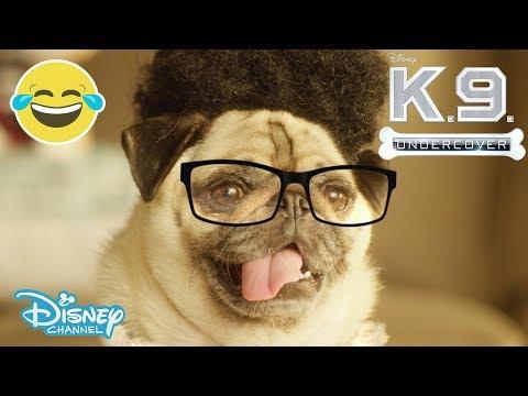 K.C Undercover | Deja Vu - K-9 Undercover 🐶 | Official Disney Channel UK