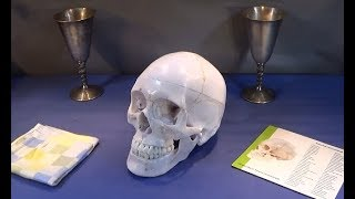A High Quality Life Sized Anatomical Model Of The Human Skull