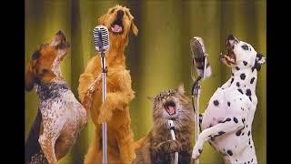 Gambar cover Cat Dog Singing Ringtone | Ringtones for Android | Funny Ringtones