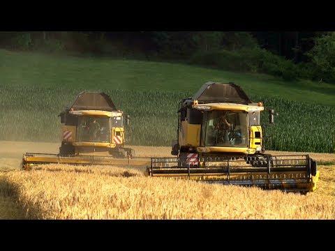 Die erste Gerste fällt !!! | 2x NEW HOLLAND | Dreschen XL | Agrartechnik in Action