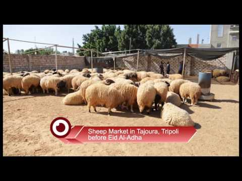 Sheep Market in Tajoura, Tripoli