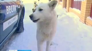 В деревне Минино под Красноярском бродячие собаки не выпускают людей на улицу
