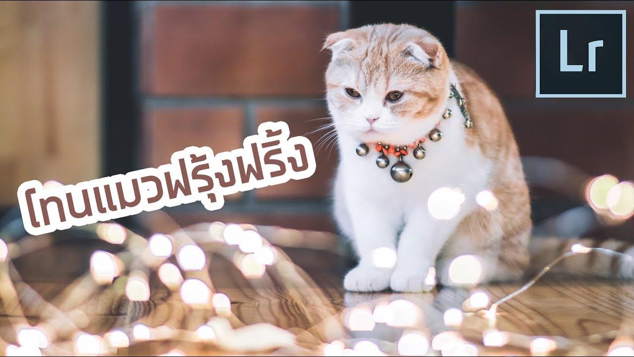 แฟนช างภาพสอนแต งภาพ โทนแมวฟร งฟร ง Lightroom L Kanbokeh Youtube