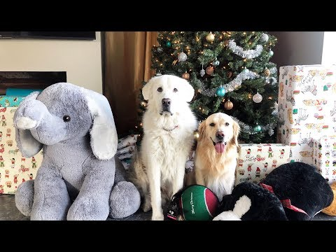 CHRISTMAS DOG SURPRISE! - Super Cooper Sunday #175