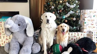 CHRISTMAS DOG SURPRISE! - Super Cooper Sunday #175