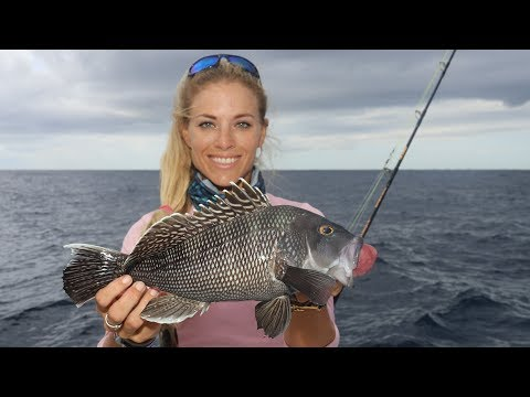 NEW YORK STYLE Black Sea Bass Catch and Cook!