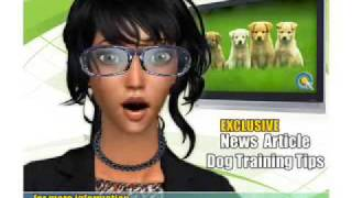 Stop Dog Chewing Furniture -  Video 14 Of Series - How To Train My Dog