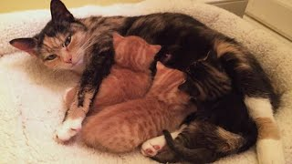 Rescue Beautiful Momma Cat with Precious Little Kittens