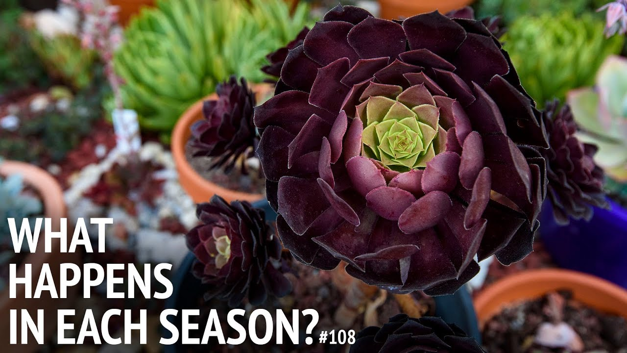 108 What Happens To Succulents Across Seasons Youtube