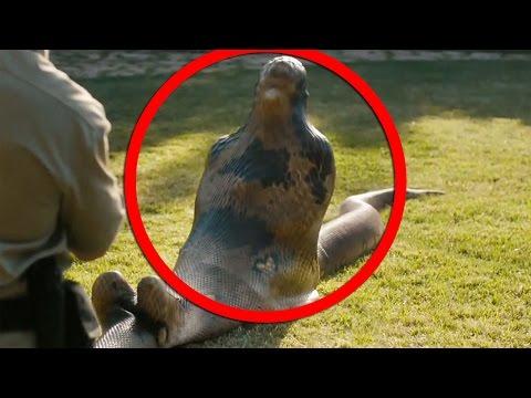 giant anaconda eats man alive -#main