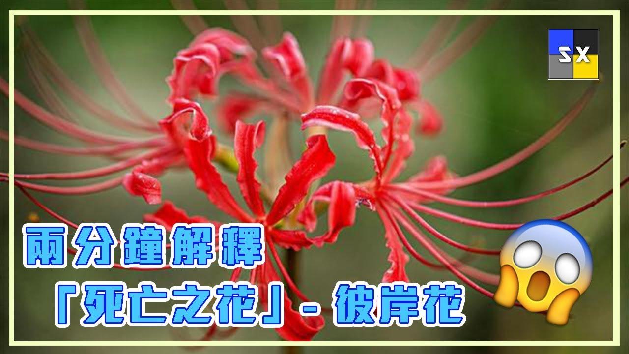 美しい花の畫像: 新著彼岸 花
