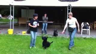 Agility Training With Scottish Terrier & Bettina In Switzerland