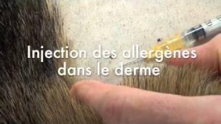 Skin Test chez le chien