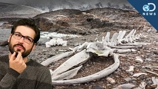 Why a Massive Whale Graveyard's in The Desert