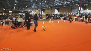 Немецкий малый шпиц. PetEXPO 2016 (FCI CACIB) - выставка собак в Риге 20.03.2016. Часть 1
