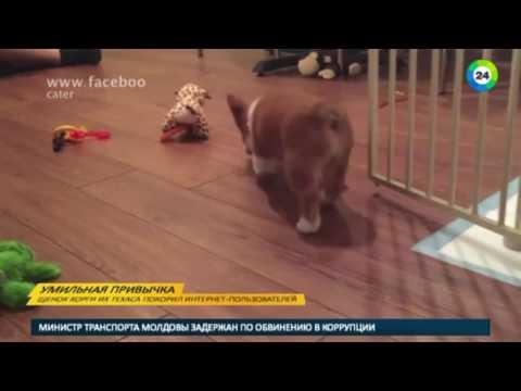 ПРИКОЛ №6 подборка приколов Смешное Видео Best Fails