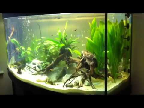 juwel vision 260 aquarium youtube. Black Bedroom Furniture Sets. Home Design Ideas