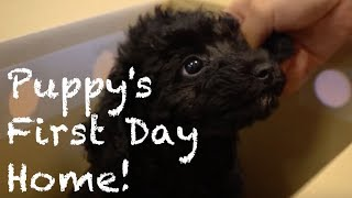 "Ten is the black toy poodle boy born on Dec24, 2015. His name ""Ten""..."