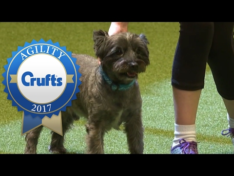 Young Kennel Club Agility Dog of the Year   Crufts 2017