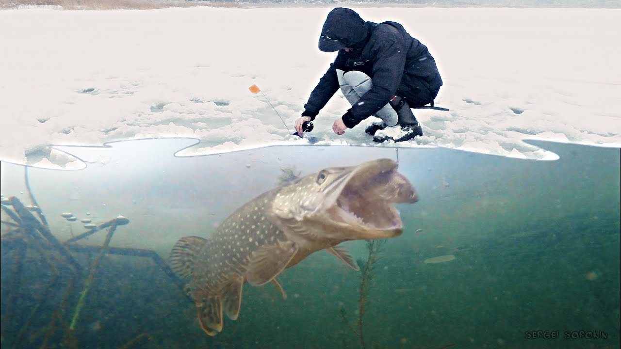 БОЛЬШАЯ ЩУКА НА ЖИВЦА! АТАКА ЩУКИ! Зимняя рыбалка на жерлицы Подводная съемка