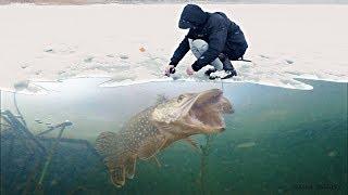БОЛЬШАЯ ЩУКА НА ЖИВЦА АТАКА ЩУКИ Зимняя рыбалка на жерлицы Подводная съемка