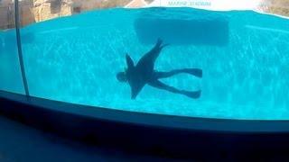 Sea Lion / アシカ ショー下田海中水族館 20120401 Goro@welsh Corgi