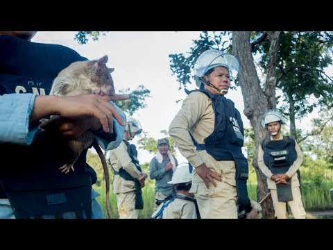 Hero Rats in Cambodia with Mike Browne